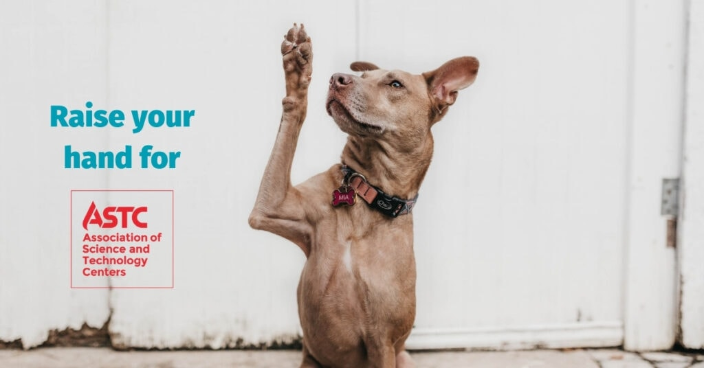 Dog raising its paw for ASTC